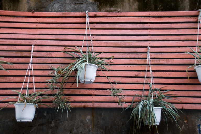hanging plants in a hanging holder