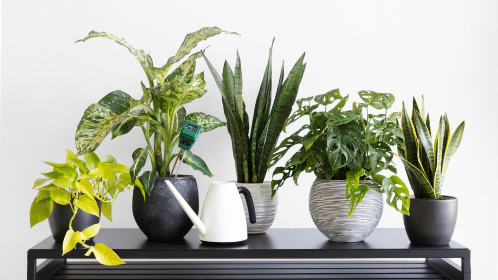 neon pothos, marble queen pothos, snake plants and monstera